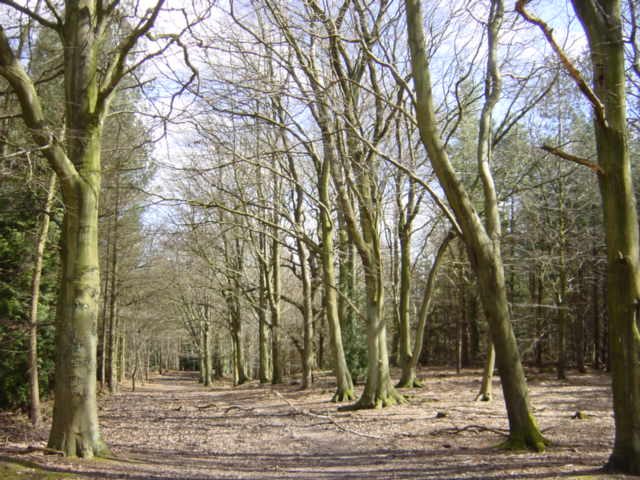 Primrosehill Wood near Tirley Hollow