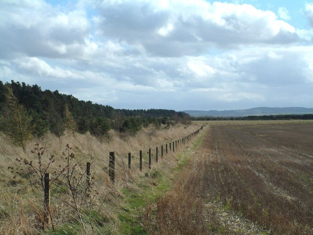 Western edge of Tentsmuir Forest