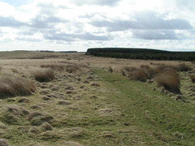 Wandylaw Bog