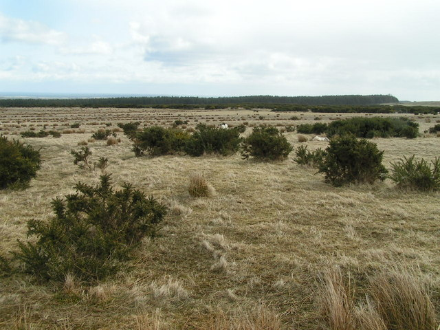 Wandylaw Moor