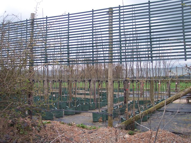 Tree Nursery, Thing-hill Court