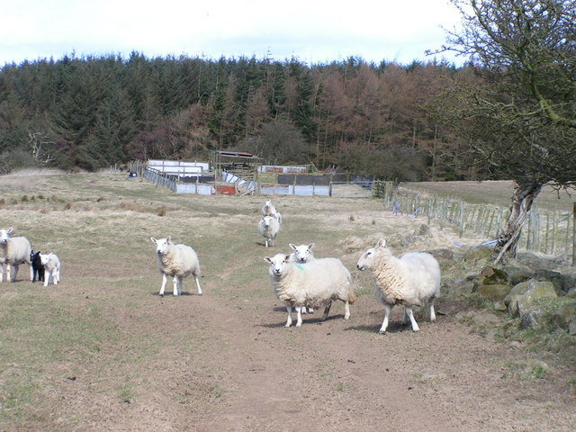 Sheep pens, Whinny Plantation