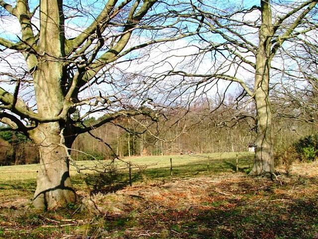 Field, Cropton Forest