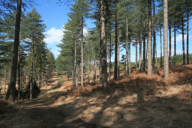 Path on Hart Hill in Highland Water Inclosure