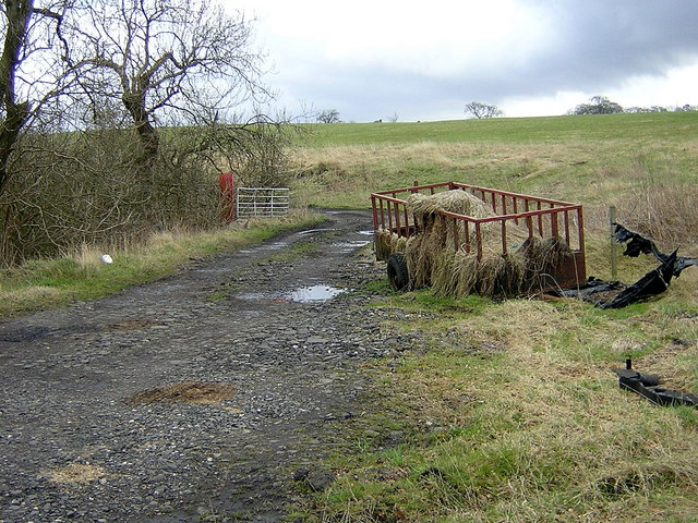Livestock Feeder
