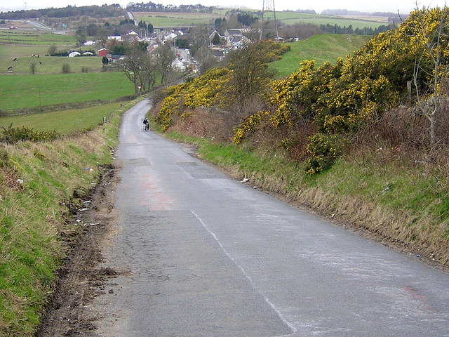 Bank of Gorse on Road to Mollinsburn
