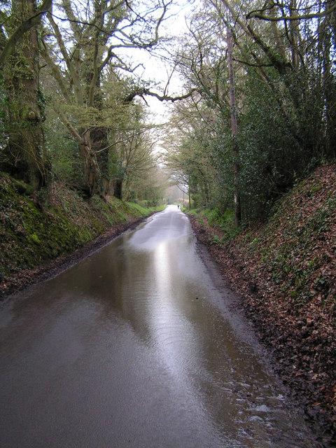 Sussex Sunken Lane