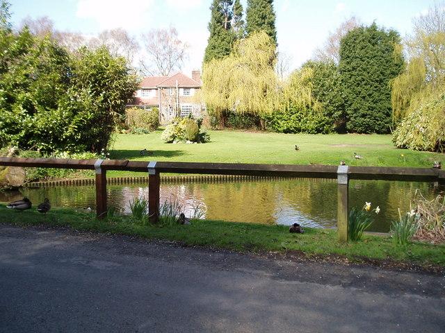 Village Pond Higher Whitley