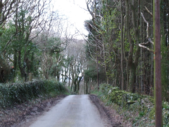 Treelined country lane