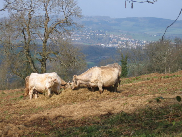 A cows eye view of Monmouth!