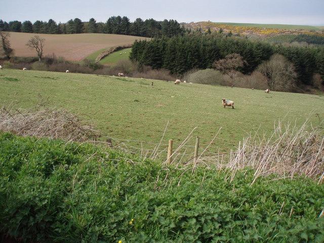 Farmland from Oak Lane.