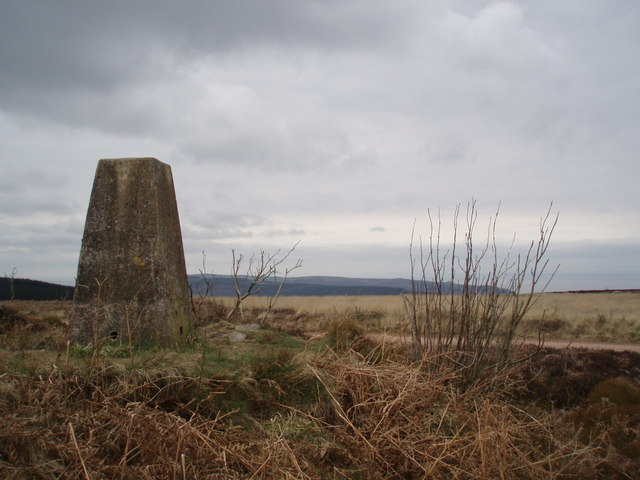 Trig Point on Withycombe Hill.