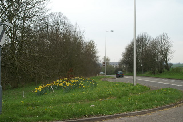 Daffs on the A38