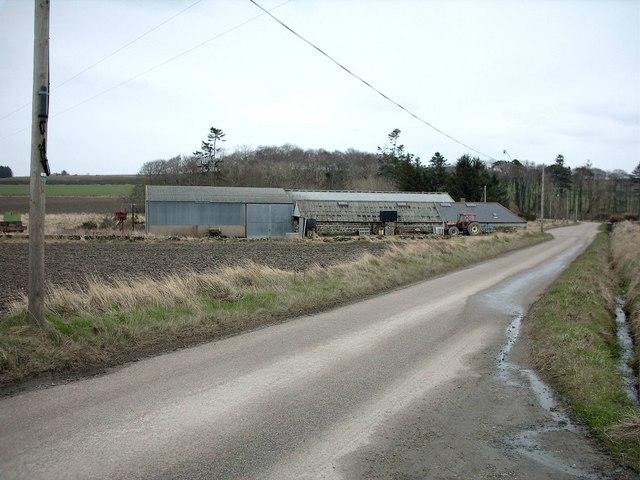 Damheads near Portsoy