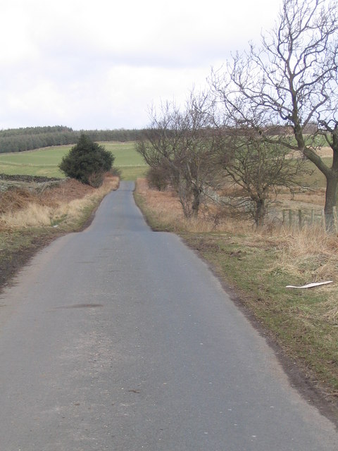 Road from Healy to Ellingstring
