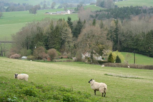 Winsham: north from Limekiln Lane