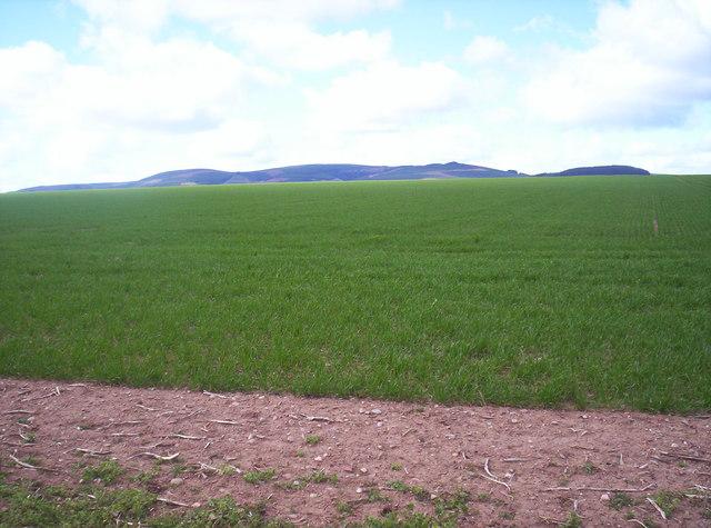 Grassy Field With Strathfinella Hill Behind