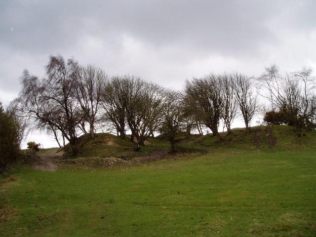 Hawthorn Trees on Moel Findeg