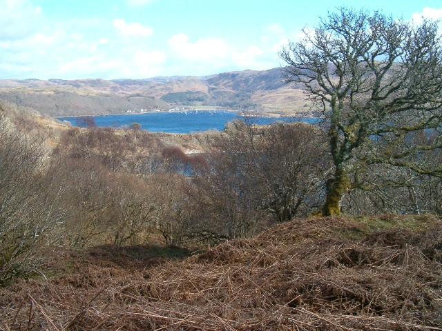 Woodland above Loch Melfort