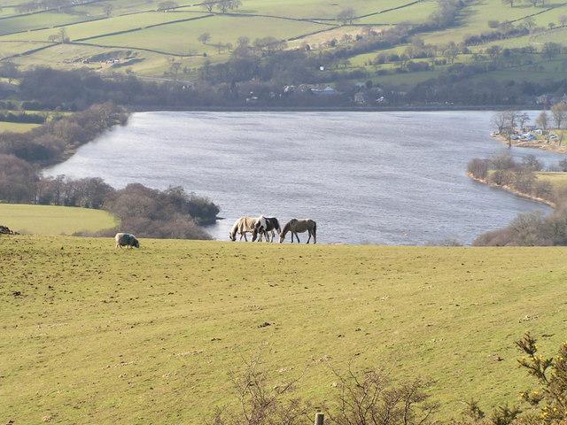 Combs Reservoir from Whitehills