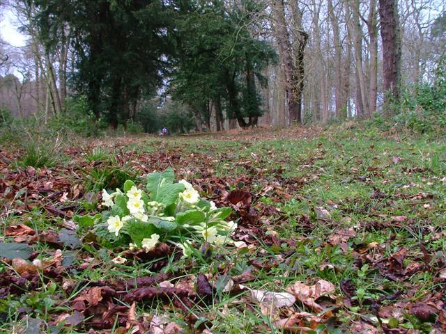 Black Fen Wood, Bramham Park