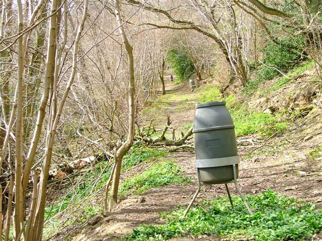 Pheasant Feeders, Callister Wood