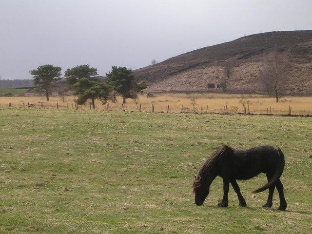 Grazing Horse near Greengill and Wan Fell