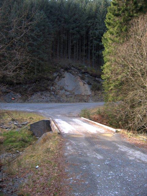 Forest track junction