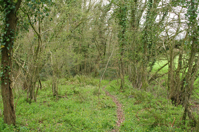 Langford Budville: edge of Coram's Wood