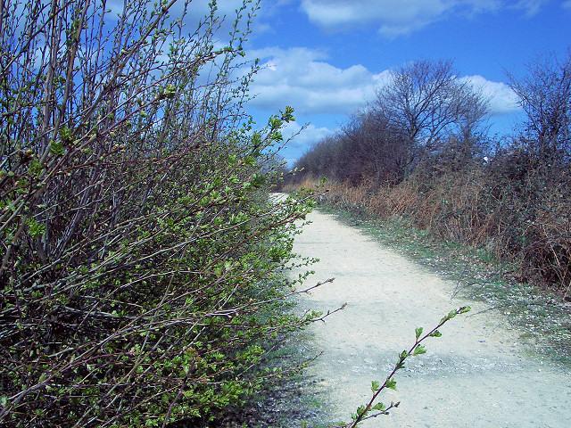 Track alongside Bullerthorpe Lane