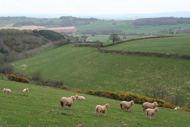 Wiveliscombe: near Bowering�s Barn