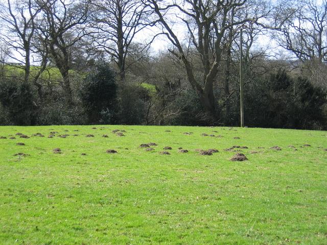 Molehills near Weatheroak Hall