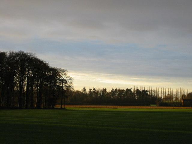 Early morning sunlight over fields