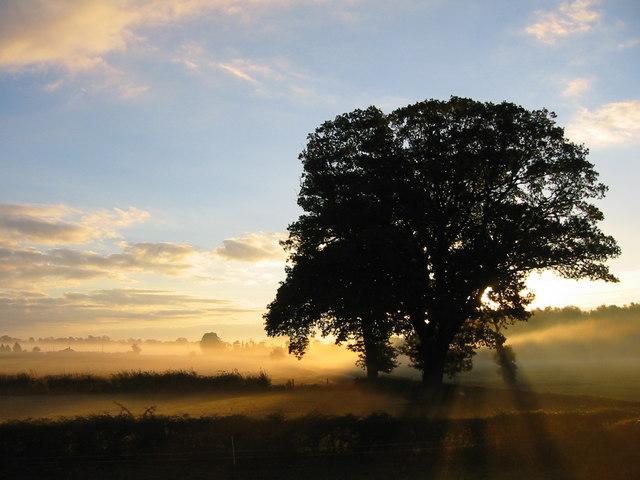 Dawn sunlight through early morning mist