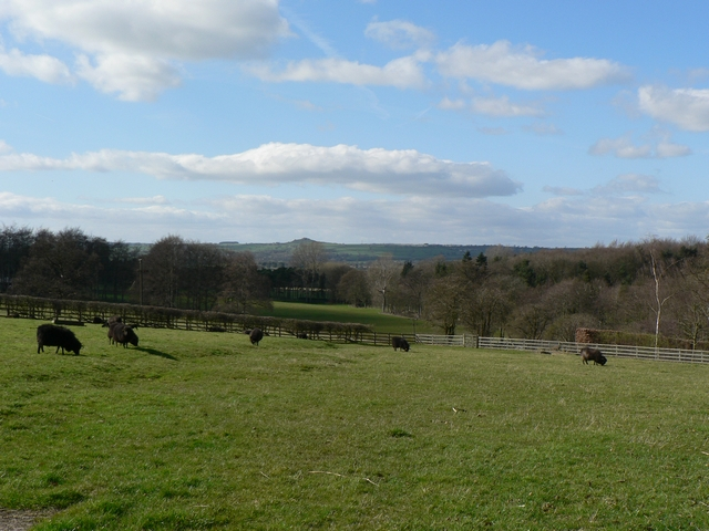 Fields at Stank, Harewood Estate