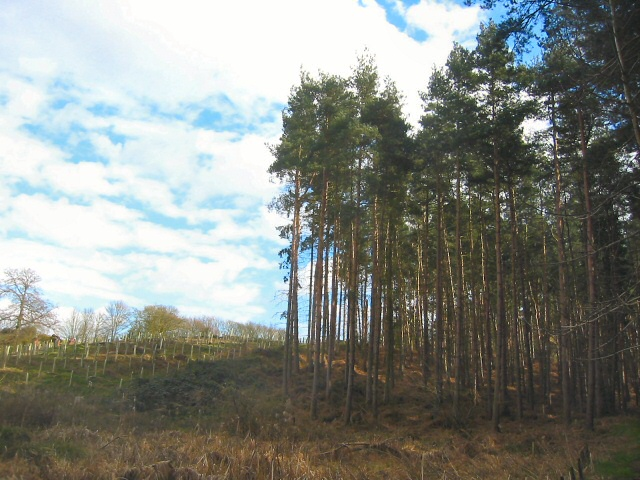 New plantation on Moor Close, Millbrook