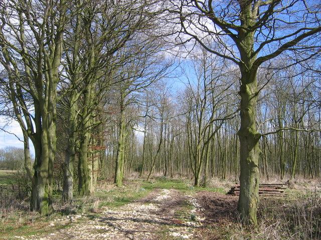 Heslerton Wold - Plantation