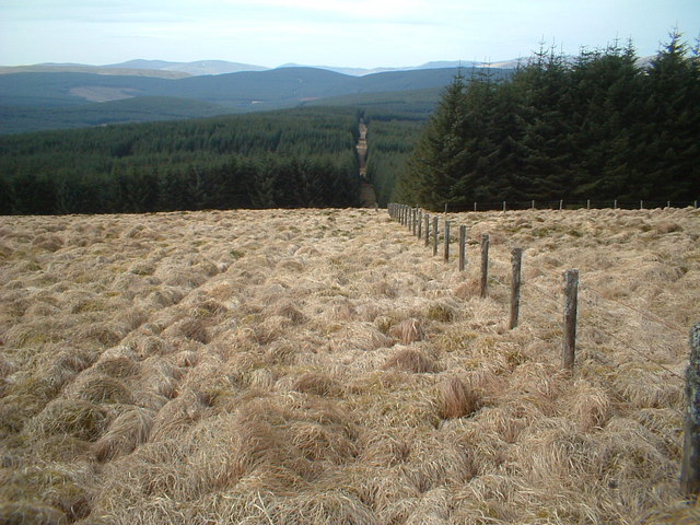 Firebreak through forest below Clyde Law