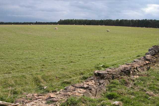 Sheep grazing to the south of Hornsleasow