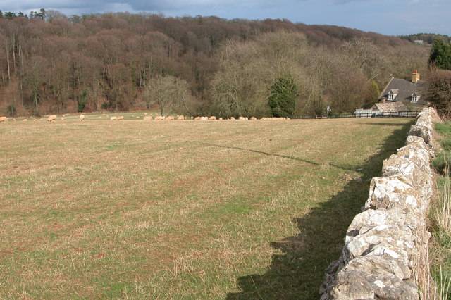 Sheep grazing by Smallthorns Cottage