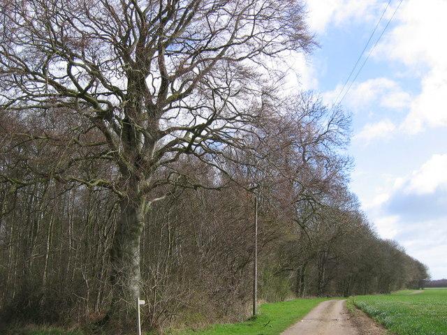 Gransmoor Wood