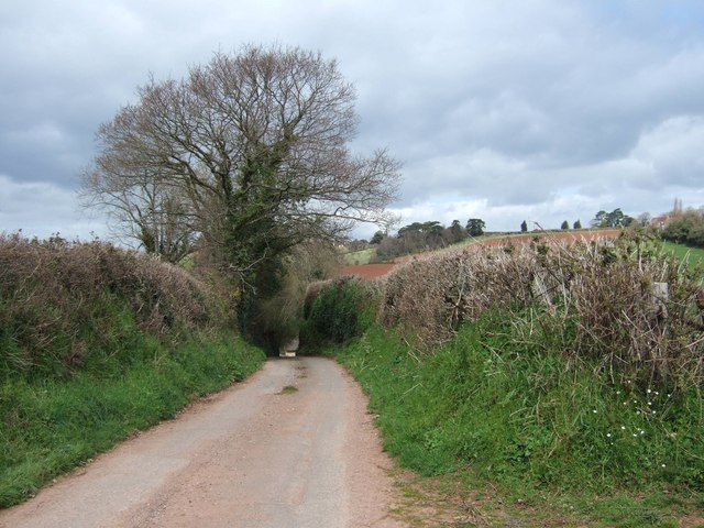 Devon lane near Exminster