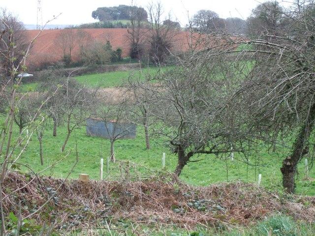 Orchard near Blackheath Farm, Exminster