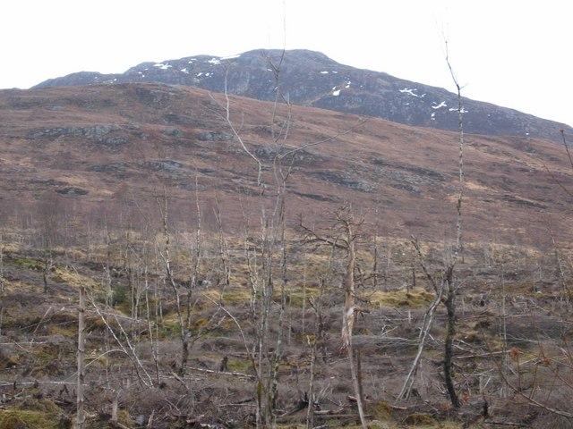 Moorland Trees