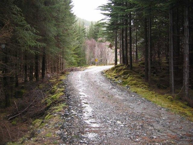 Glen Moriston Forest Track