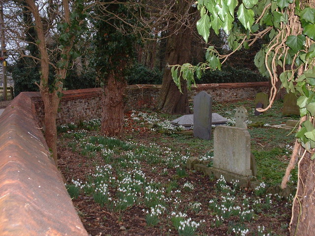 Snowdrops in the graveyard at North Wootton, Norfolk