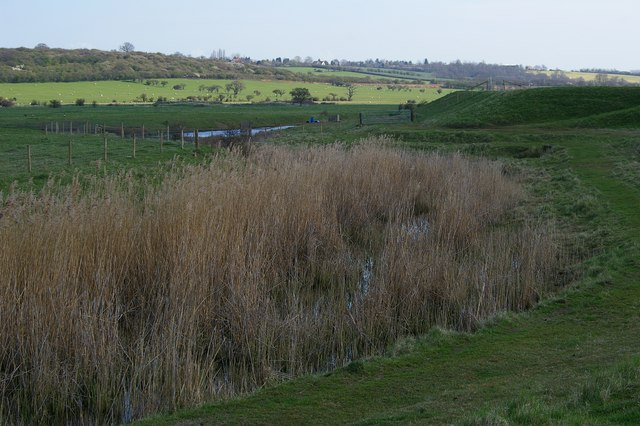 Reeds in the Borrowdyke