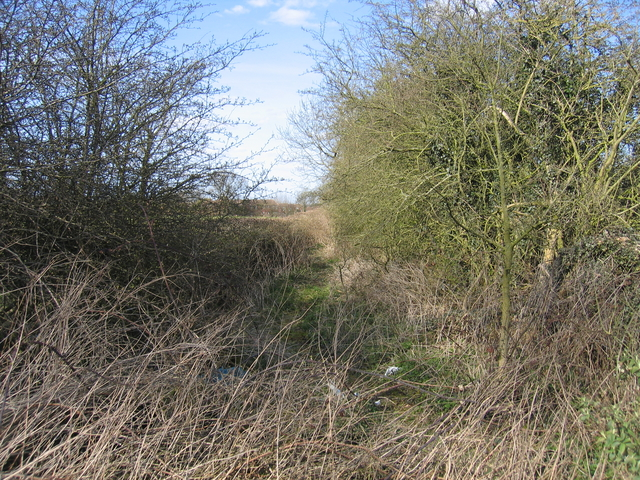 Overgrown towing horse path.
