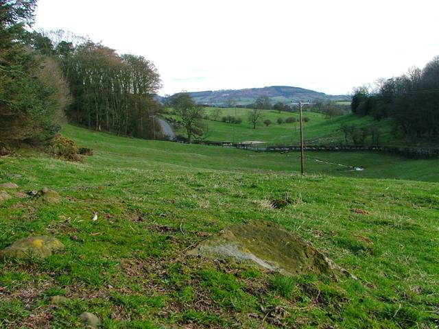 Field, Carlow Hill