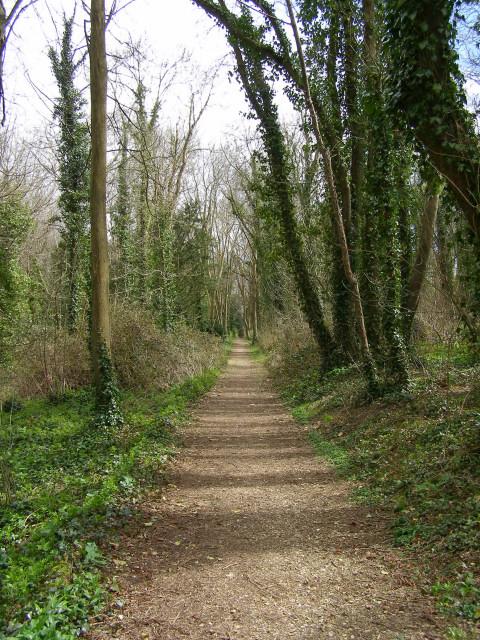 Footpath through Metlands Wood